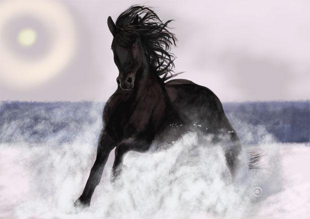 Wild Black Stallion Horse